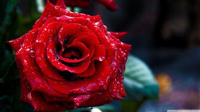 «Сердце розы»: упражнение для развития концентрации и внимания
