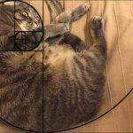 Похоже коты тоже знают про фибоначчи :)
