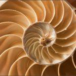 Золотое сечение в морской ракушке
