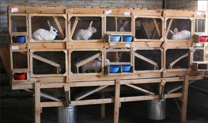 Выгоден ли кроличий бизнес и как открыть кроличью ферму?