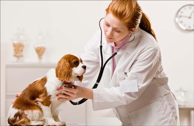 Изображение - Что можно продавать в маленьком городе veterinar